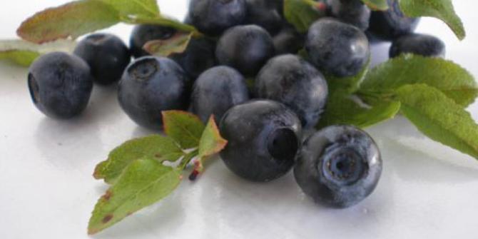 8 Makanan Untuk Mata Sehat